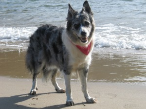 Chandi - The Amazing Dancing Dog.
