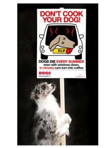 Don't cook your dog!