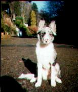 Chandi, aged 17 weeks